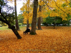 Outono no Beacon Hill Park / Fall in the Beacon Hill Park.