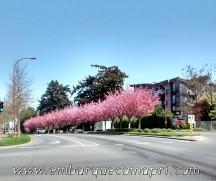 Foto tirada na primavera - 8 de abril de 2015
