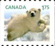 Baby-Wildlife---Polar-Bear
