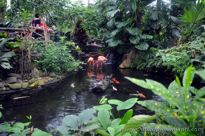 Butterfly Gardens04
