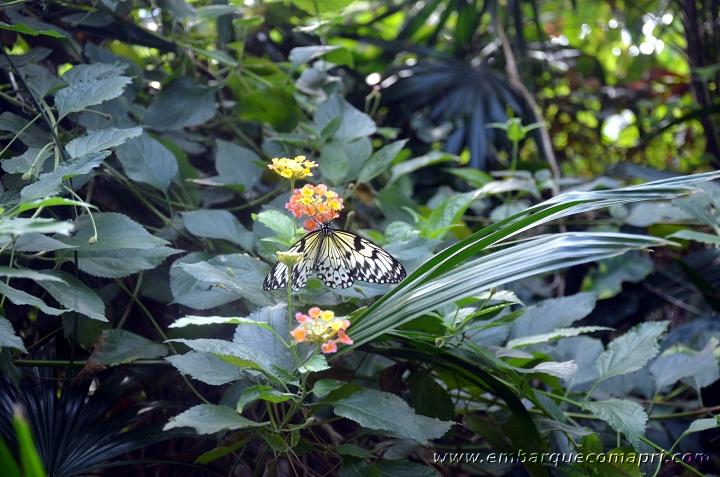 Butterfly Gardens06