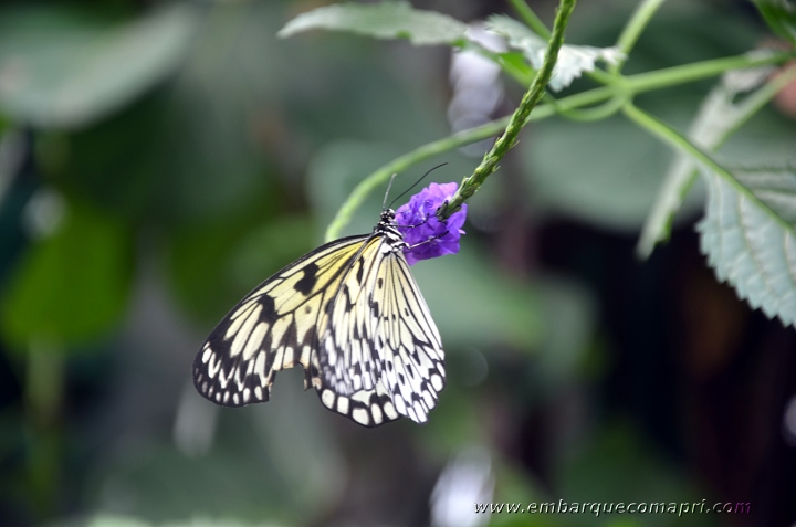 Butterfly Gardens07