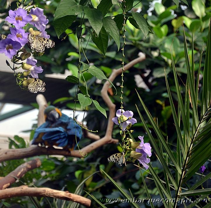 Butterfly Gardens08