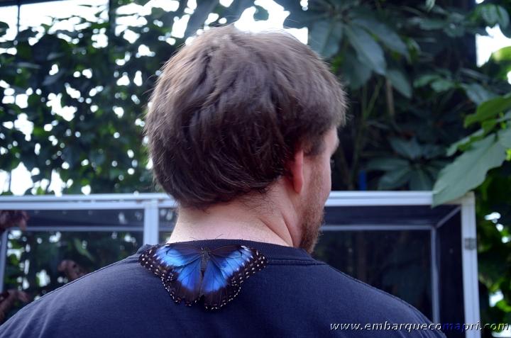 Butterfly Gardens9
