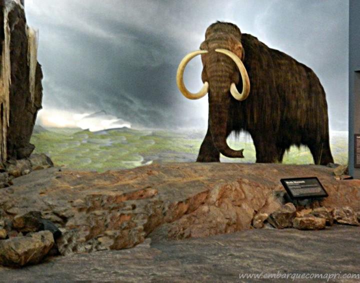 Royal BC Museum_mamute